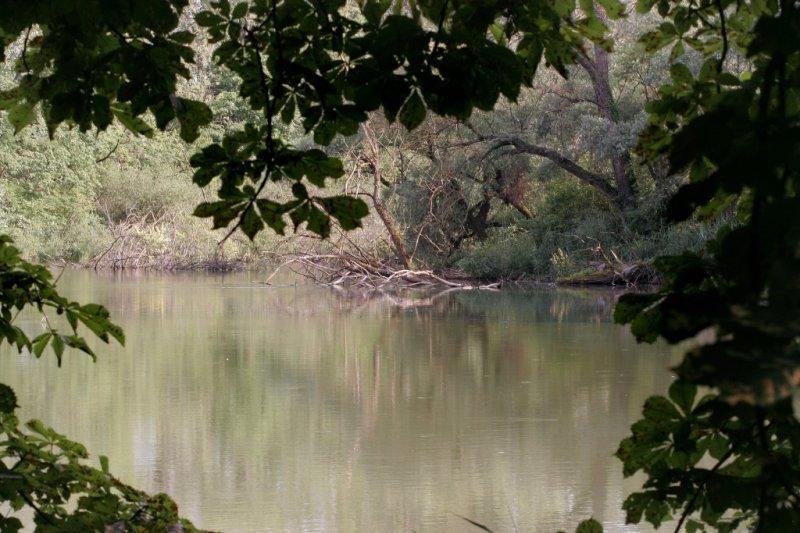Réserve naturelle la Petite Camargue Alsacienne