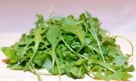 conserver-salade-roquette