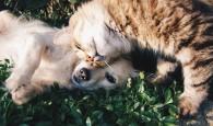 Chat et chien, des animaux de compagnie que l'on peut adopter en refuge