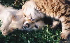 Un chat et un chien, des animaux de compagnie que l'on peut adopter en refuge