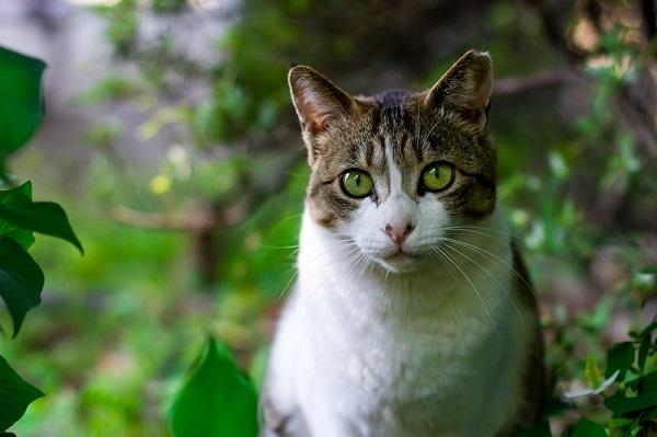 Chat, animal de compagnie pouvant être adopté dans un refuge